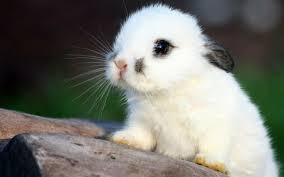 bunny (บั๊นนี) กระต่าย, ลูกกระต่าย