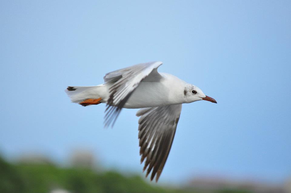 seagull นกนางนวล